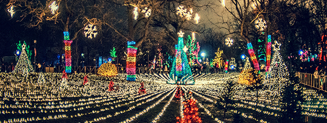 5 Must-Do Holiday Family Activities | Try these free or low-cost holiday activities with your family this season to start a new tradition and inspire wonder and holiday magic. | A photo of the Zoo Lights at Lincoln Park Zoo, courtesy of Lincoln Park Zoo.